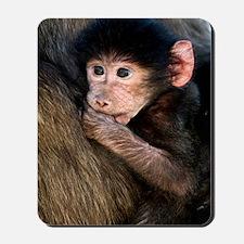 Young Chacma baboon Mousepad