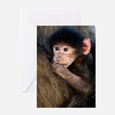 Young Chacma baboon Greeting Card