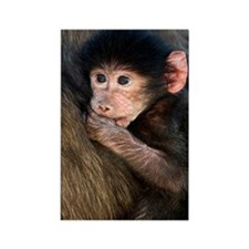 Young Chacma baboon Rectangle Magnet
