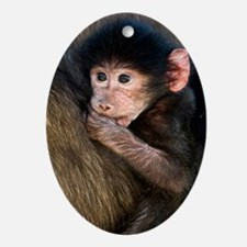 Young Chacma baboon Oval Ornament