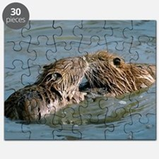 Young coypus playing Puzzle