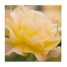 Yellow rose (Rosa hybrid) Tile Coaster