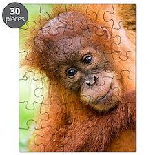 Young Sumatran orangutan Puzzle