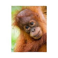 Young Sumatran orangutan Twin Duvet