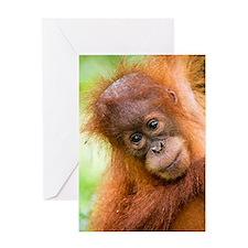 Young Sumatran orangutan Greeting Card