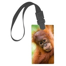 Young Sumatran orangutan Luggage Tag