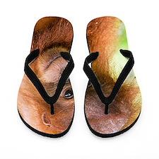 Young Sumatran orangutan Flip Flops