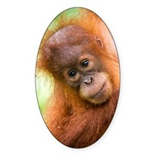 Young Sumatran orangutan Decal