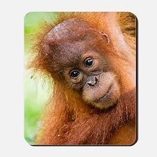 Young Sumatran orangutan Mousepad