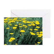 Yarrow (Achillea 'Moonshine') Greeting Card