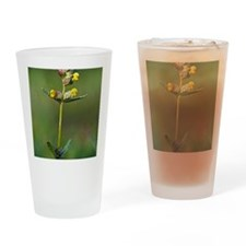 Yellow rattle (Rhinanthus minor) Drinking Glass