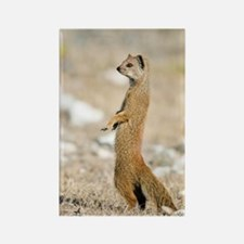 Yellow mongoose Rectangle Magnet