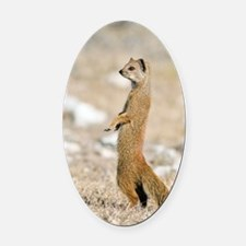 Yellow mongoose Oval Car Magnet