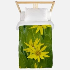 Woolly mule ears (Wyethia mollis) Twin Duvet