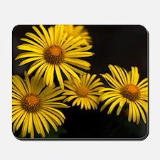 Yellow daisies (Chrysanthemum multicaule Mousepad