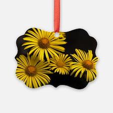 Yellow daisies (Chrysanthemum mul Ornament