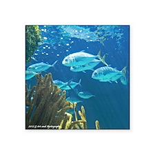Tropical Fish Square Sticker 3&Quot; X 3&Quot;