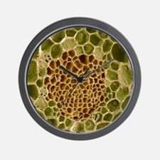 Xylem and phloem plant tissue, SEM Wall Clock