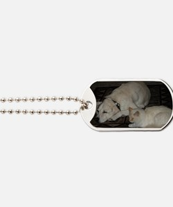 Dogs and cats Dog Tags