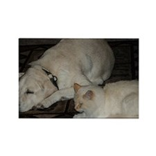Dogs and cats Rectangle Magnet