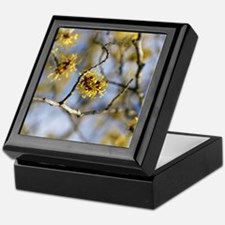 Witch Hazel (Hamamelis mollis) flower Keepsake Box