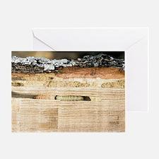 Wood-boring insect larva Greeting Card