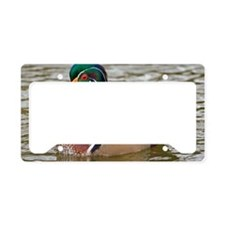 Wood duck on a lake License Plate Holder