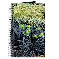Winter aconite (Eranthis hyemalis) Journal