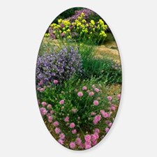 Wildflowers in western Australia Decal