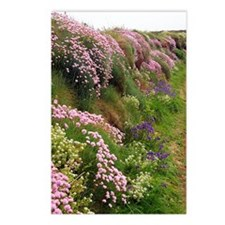 Wildflowers along a coast Postcards (Package of 8)