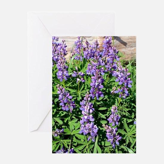 Wild lupin flowers Greeting Card