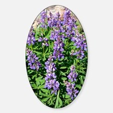 Wild lupin flowers Sticker (Oval)