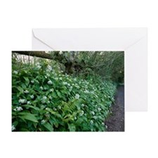 Wild garlic in woodland Greeting Card
