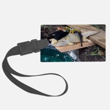 Pirate Spiny the Lizard Luggage Tag