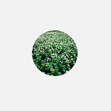 Wild garlic (Allium ursinum) in a wood Mini Button