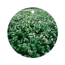 Wild garlic (Allium ursinum) in a w Round Ornament
