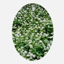 Wild garlic (Allium ursinum) Oval Ornament