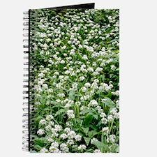 Wild garlic (Allium ursinum) Journal