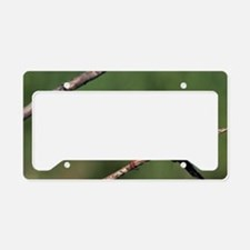 White-throated kingfisher License Plate Holder