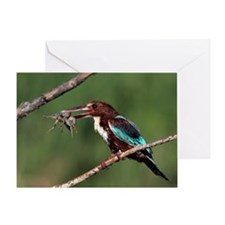 White-throated kingfisher Greeting Card