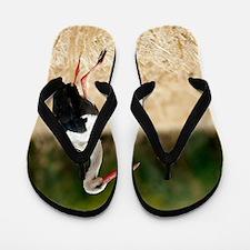 White stork Flip Flops