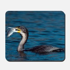 White-breasted cormorant with fish Mousepad