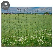 Wheat field Puzzle