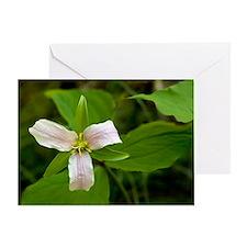 Western trillium (Trillium ovatum) Greeting Card