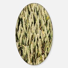 Wheat field Sticker (Oval)