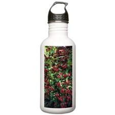Weigela 'Bristol Ruby' Water Bottle