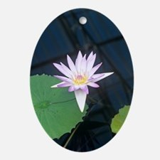 Water lily 'Blue Beauty' flower Oval Ornament