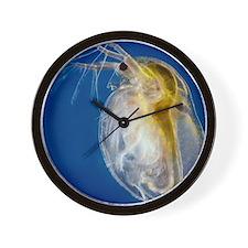 Water flea Wall Clock