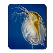 Water flea Mousepad