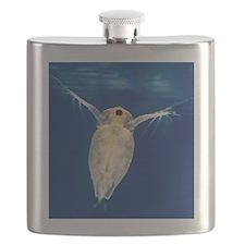 Water flea Flask